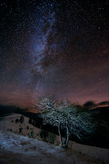 Lonely tree over the starry sky in winter mountains