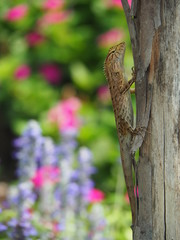 Lizard On Tree Trunk With Colorful Flowers Garden Background