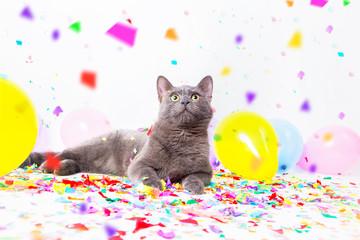 Katzen feiert eine Party