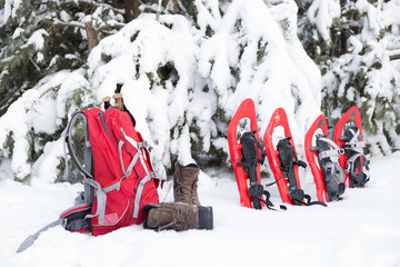 Four red snowshoe standing in the snow near the spruce forest.