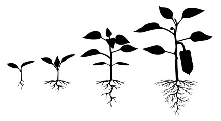 Set of silhouettes of peppers plants