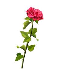 Red rose isolated on white background. Digital Illustration