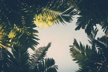 Palm leaves on sky background vintage color