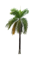 Palm tree isolated on white