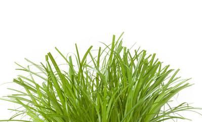 Gras, Ostergras, isoliert