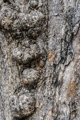 texture of tree trunk