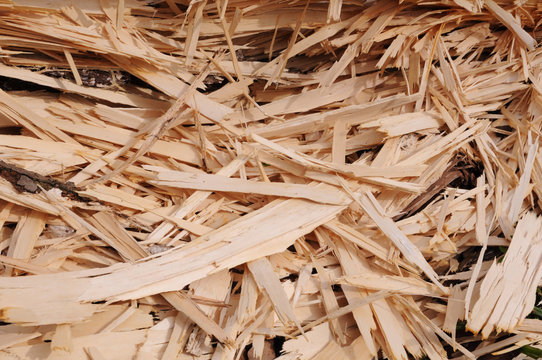 Wood chips on the ground in the forest