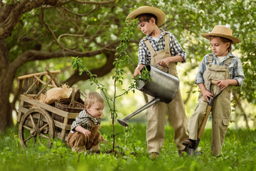 Children plant a tree in the garden