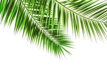 Palmwedel auf weiß isoliert