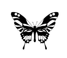 Hand drawn ornamental butterfly outline illustration