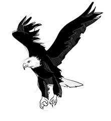 vector sketch style drawing of flying bald eagle
