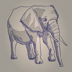Vector sketch hand drawing illustration elephant standing