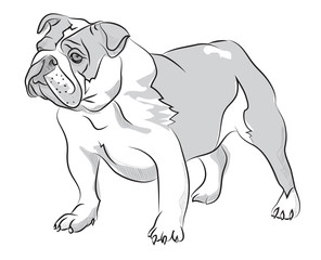 Vector sketch hand drawing illustration bulldog standing