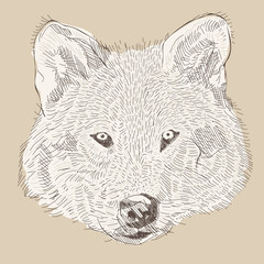 engraving style vector hand drawing wolf head