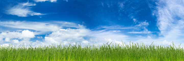 green natural grass with earth in front of blue sky cloudy background