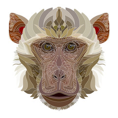 Monkey detailed hand drawn portrait. 2016 year symbol.