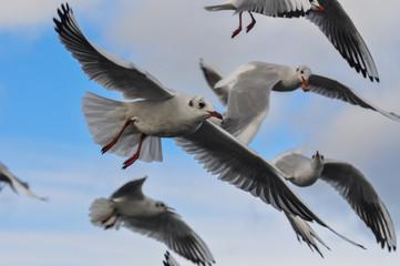flock of white seagulls