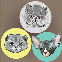 Three painted cat muzzles drawn in a circle