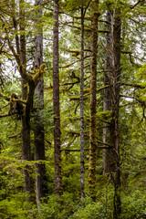 Vegetation in BC's Coastal Rainforest, Canada