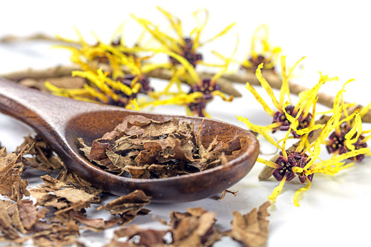 flowering witch hazel (Hamamelis) and spoon with dried leaves