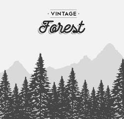 Vintage forest text label on winter tree landscape