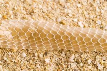 Snake skin on beach