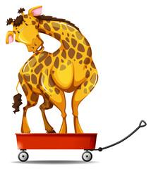 Giraffe standing on small wagon