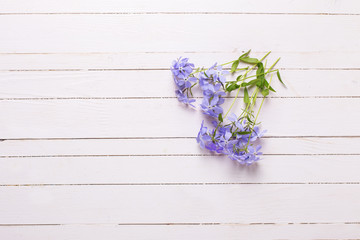 Background with tender blue flowers on white painted wooden plan