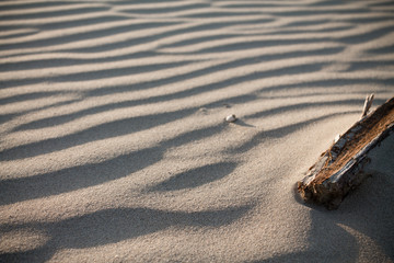 close-up of piece of branch on a sandy beach, isolated