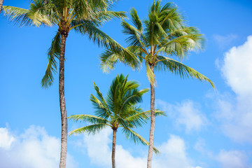 Coconut trees against beautiful blue skies. tropical setting.