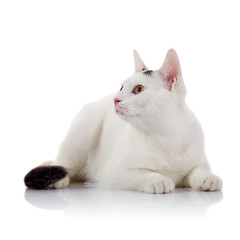 White cat with yellow eyes