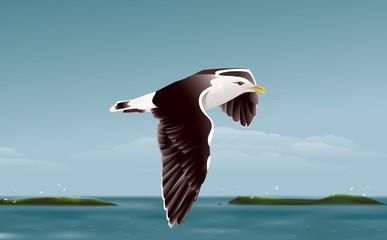 Seagull, Sea and Islands 02