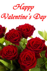 Happy Valentines Day, red roses on a white background