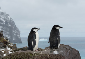 Pair of chinstrap penguins on the rock, looking at the sea, with rock in background, South Sandwich Islands, Antarctica