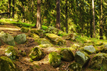 North scandinavian pine forest with path and stones, Sweden natural travel outdoors background