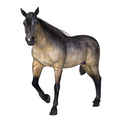 Grulla Horse on White