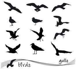 Vector collection of silhouettes of gulls