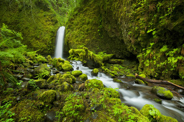 Remote waterfall in lush rainforest, Columbia River Gorge, USA