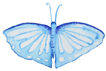 Watercolor butterfly on white