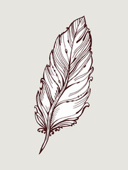Vector graphic, artistic, stylized image of quill