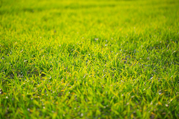 Grass, meadow, football pitch, green, grow, nature, plant, soccer, sport meadow,