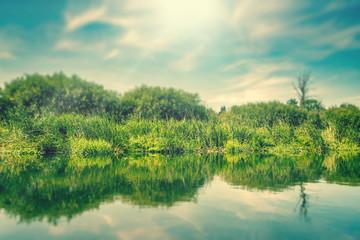 Green grass by a lake