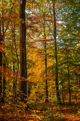 Forest with tall trees in the fall