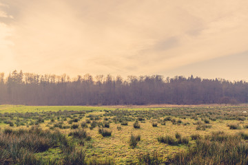 Sunrise scenery with a green field