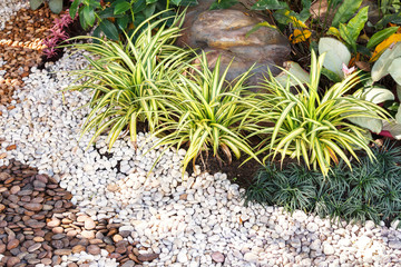 Landscaping combinations of plant and grass Wall mural