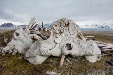 Pozostałości osady wielorybniczej