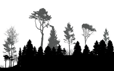 Image of Nature. Tree Silhouette. Eco banner. Vector Illustratio