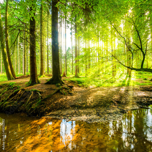 Wall mural Wald mit Sonne