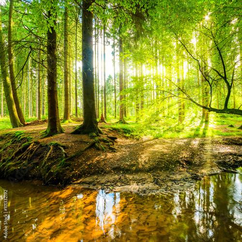 Fototapete Wald mit Sonne