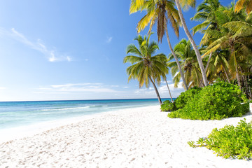 Landschaftsbild der Insel Saona ohne Menschen in Punta Cana in der Dominikanischen Republik